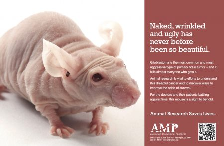 AMP_Nude Mouse QR