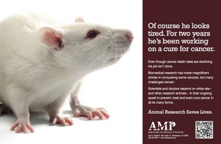AMP_White Rat QR