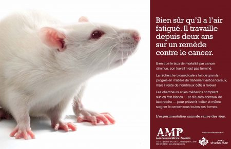 French Poster_White Rat_Final