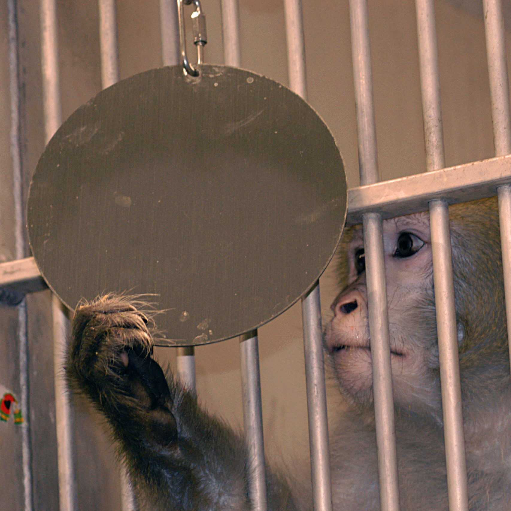 Monkey with mirror