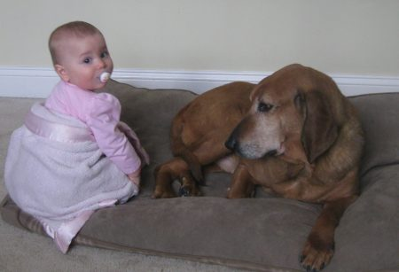 Pacer, a retired research dog with Amelia, a baby needing allergy medicine.