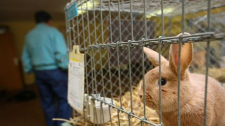 Animals will continue to be used for testing medical products until there is a viable replacement. (Getty Images: Rklfoto)