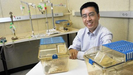 UC Irvine pharmacology Professor Qun-Yong Zhou shows mice in their sleeping quarters as part of a study Zhou is leading on why some animals sleep at night and others sleep during the day. (Kevin Chang | Daily Pilot)